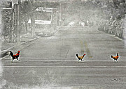Crosswalk Photos - Chickens crossing the road by Lorella  Schoales