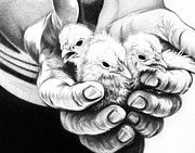 Hands Drawings - Chickens by Natasha Denger
