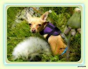 Puppies Photo Originals - Chicklet in the Dandelions by Karin Przybilski