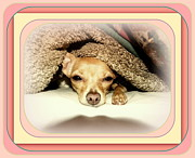 Puppies Photo Originals - Chicklets Cozy Nook by Karin Przybilski