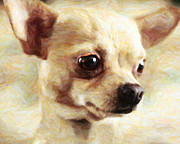 Dogs Digital Art Metal Prints - Chihuahua Dog - Painterly Metal Print by Wingsdomain Art and Photography