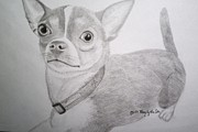 Pencil Drawings Of Pets Prints - Chihuahua Print by Mary  By The Sea