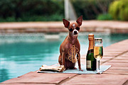 Money Photo Originals - Chihuahua with Money by Kathy Sidjakov