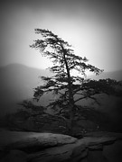 Chimney Rock State Park Prints - Chimney Rock Lone Tree in Black and White Print by Kelly Hazel