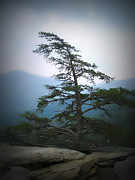 Chimney Rock State Park Prints - Chimney Rock Lone Tree in Color Print by Kelly Hazel