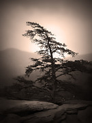 Chimney Rock State Park Prints - Chimney Rock Lone Tree in Sepia Print by Kelly Hazel