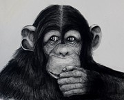 Primate Drawings - Chimp by Jean Cormier