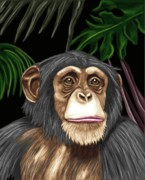 Monkey Digital Art - Chimp by Karen Sheltrown