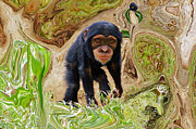 Chimpanzee Glass - Chimpanzee by Daniele Smith