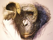 Chimpanzee Print by Julian Wheat