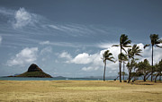 Chinaman's Hat Island Print by Joanna Madloch