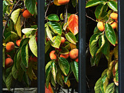 Tangy Framed Prints - Chinatown Persimmons Framed Print by Pamela Patch