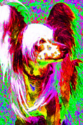 Puppy Digital Art Framed Prints - Chinese Crested Dog 20130125v2 Framed Print by Wingsdomain Art and Photography