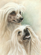 Pair Pastels Framed Prints - Chinese crested Framed Print by Tobiasz Stefaniak