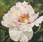 Alfred Ng Metal Prints - Chinese tree peony Metal Print by Alfred Ng