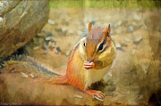 Chipmonk - Digital Paint I Print by Debbie Portwood