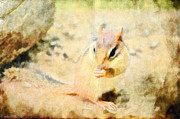 Chipmonk - Digital Paint II Print by Debbie Portwood