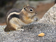 Teresa Cox - Chipmunk 1 - Bless this...
