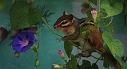 Chipper Posters - Chipmunk in the Morning Glory Vine Poster by Marjorie Imbeau