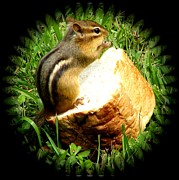 Chipmunk Saying Grace Print by Rose Santuci-Sofranko