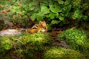 Fur Stripes Prints - Chipmunk - What a cutie  Print by Mike Savad