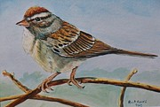 Chipping Sparrow Prints - Chipping Sparrow Print by Richard Goohs