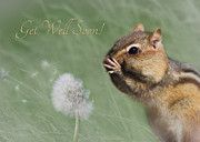 Squirrel Digital Art Metal Prints - Chippy Get Well Soon Metal Print by Lori Deiter
