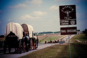 Cattle Photo Prints - Chisholm Trail Centennial Cattle Drive Print by Toni Hopper