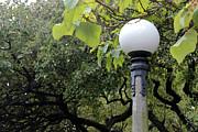 Stephen Prestek - Chittenden Garden