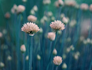 Kitchen Decor Prints - Chive Blues Print by Irina Wardas