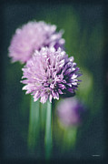 Gardens And Flowers - Chives at Attention by Crystal Wightman