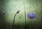 Chives Framed Prints - Chives in December Framed Print by Constance Fein Harding