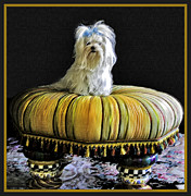 White Maltese Art - Chloe On Her Tuffet by Madeline Ellis