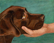 Labs Paintings - Chocolate Lab Head in Hand by Amy Reges