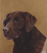 Hunting Pastels Framed Prints - Chocolate Lab Framed Print by Loreen Pantaleone