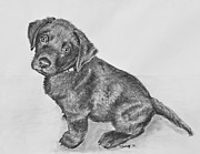 Chocolate Lab Drawings - Chocolate Lab Puppy Artwork by Kate Sumners