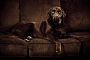Trevor Slauenwhite - Chocolate Lab