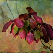 Magneta Posters - Chokecherry Leaves Poster by Shirley Sirois