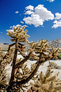 Easter Cactus Art Posters - Cholla Cactus Poster by Keith Ducker