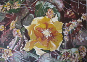 Julie Todd-Cundiff - Cholla Flowers