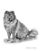 Pets Art Drawings Prints - Chow Chow Woofy Print by Jack Pumphrey