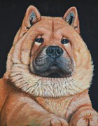 Black Nose Originals - Chow by Shirl Theis