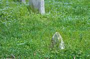 Christ Church Graveyard Print by Kay Pickens