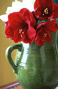 Christmas Greeting Prints - Christmas Amaryllis Print by Kathy Yates