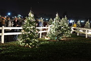Christmas At The Ellipse - Washington Dc - 01133 Print by DC Photographer