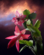 Photography By Govan; Vertical Format Prints - Christmas Cactus Print by Andrew Govan Dantzler