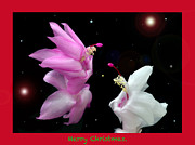 Christmas Card Framed Prints - Christmas Cactus Fantasy Framed Print by Terence Davis