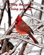 Avian Greeting Cards Posters - Christmas Card 10 Poster by Betty LaRue