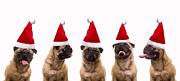 Pug Dog Posters - Christmas Caroling Dogs Poster by Edward Fielding