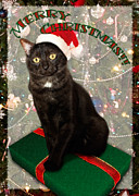 Feline Digital Art Metal Prints - Christmas Cat Metal Print by Adam Romanowicz